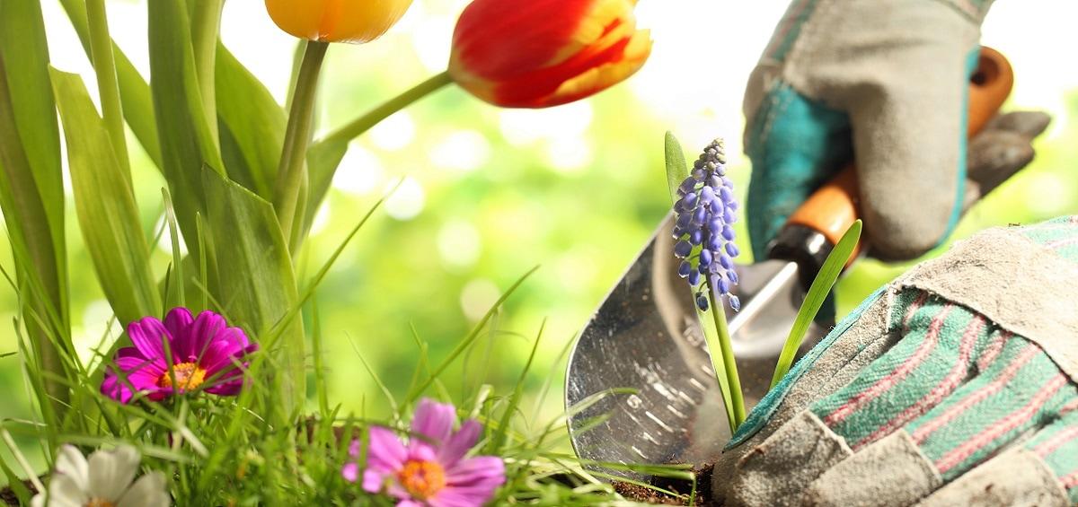 Στο βάθος κήπος:Τα οφέλη της κηπουρικής και γιατί να την ξεκινήσεις!