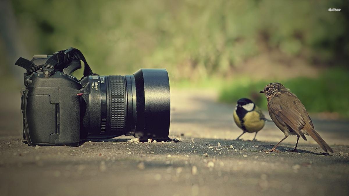 cameras_0